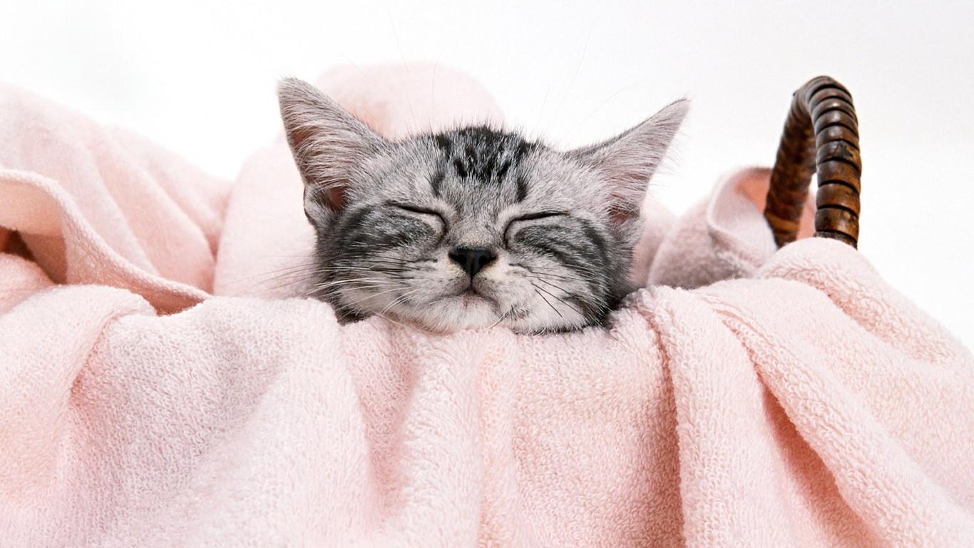 最后,送上可爱的猫咪,大家晚安哦
